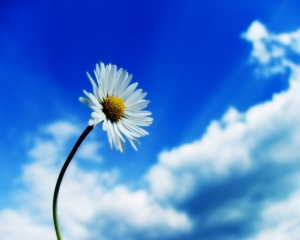 White-daisy-blue-sky-bright-colors-20523941-1280-1024
