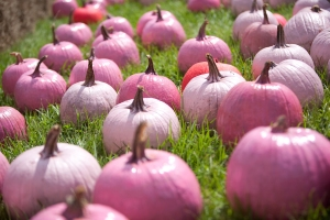 Even the Pumpkins are pink!